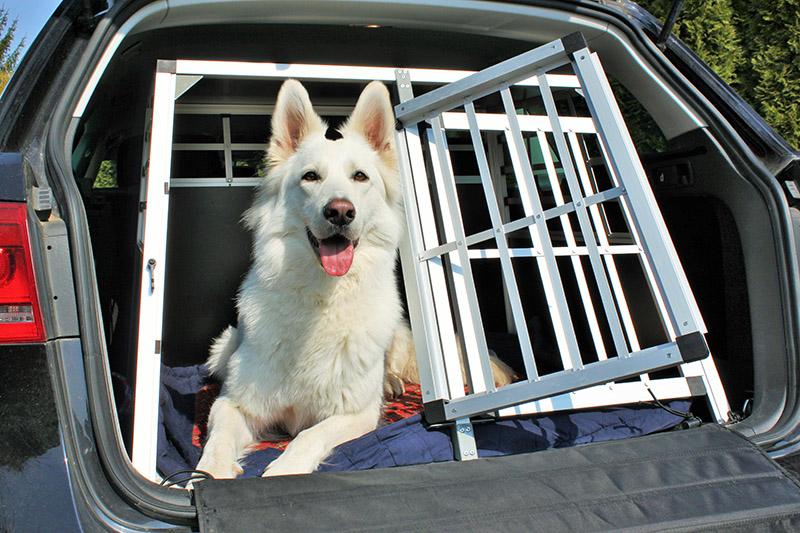 Transporte de animais de estimação