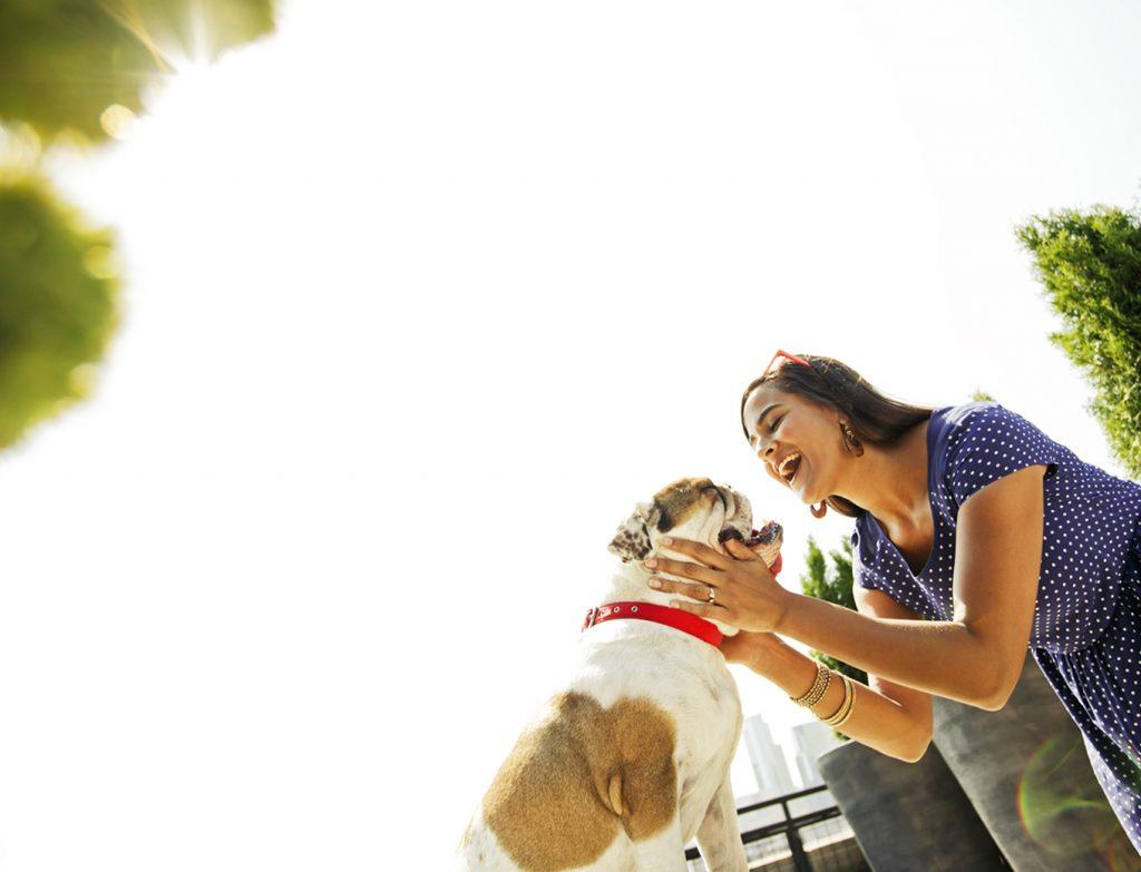 acessar a saúde do animal de estimação